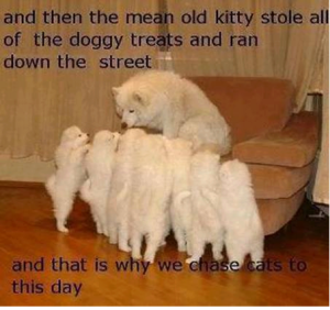 mean-kitty
