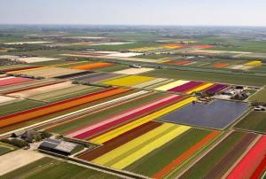 tulipspa0605_800x5391