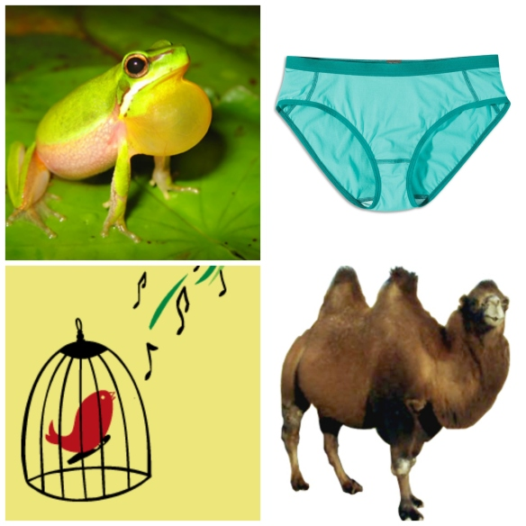 Frogs, Caged Birds, Underwear and Camel Humps
